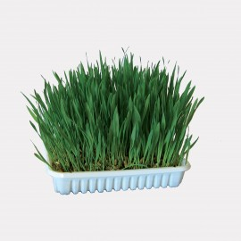 HERBE A CHAT 100G
