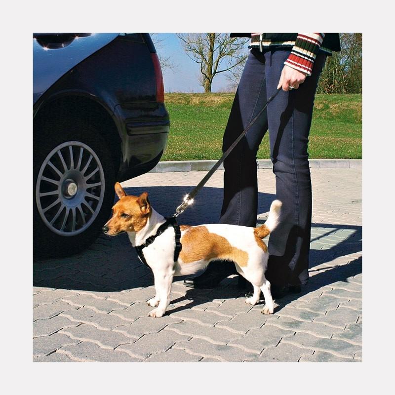 harnais de s curit auto pour chien plusieurs tailles 10 petits z bres. Black Bedroom Furniture Sets. Home Design Ideas