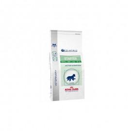 ROYAL CANIN Chien PEDIATRIC STARTER SMALL