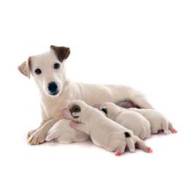 Lait d'allaitement NEOBION PET 200 gr pour chiots chatons et NAC petits mammiferes