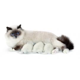 Lait d'allaitement NEOBION PET 400 gr pour chiots chatons et NAC petits mammiferes