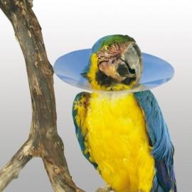 Carcan anti picage pour Oiseaux